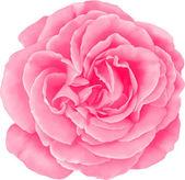 Red Rose Flower — Stock Vector