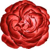 Rote rose blume — Stockvektor