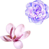 Magnolia and blue rose — Stock Vector