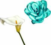 Blue Camellia and Calla flower — Stock Vector