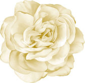 Gelbe rose blume — Stockvektor