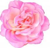 Rosa rosa blume — Stockvektor
