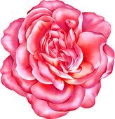 Purple Rose Flower — Stock Vector