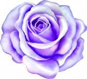 紫玫瑰花朵 — 图库矢量图片