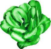 グリーンのバラの花 — ストックベクタ