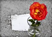 Red rose in    vase on sand — Stock Photo