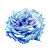 Blue Rose Flower — Stock Photo