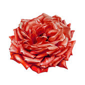 Red Rose Flower — Stock Photo