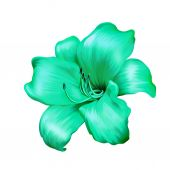 Green lily flower — Stock Photo