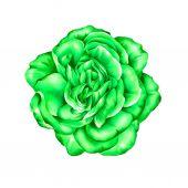 Yeşil gül çiçek — Stok fotoğraf