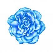ブルーのバラの花 — ストック写真