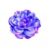紫のバラの椿の花 — ストック写真