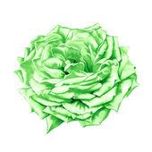 Flor rosa grande verde — Foto de Stock
