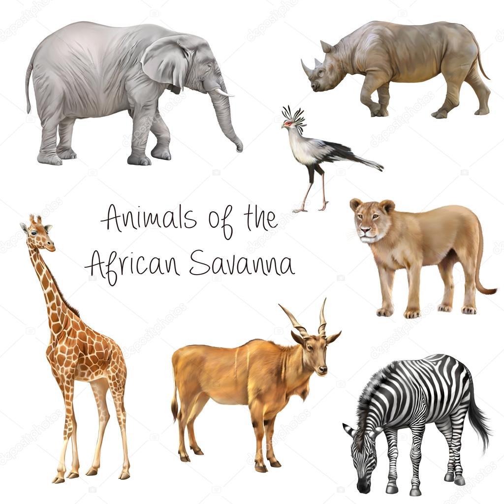 Animaux de la savane africaine photo 81061088 - Animaux savane africaine ...
