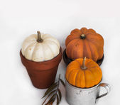Assorted pumpkins on white backdrop — Stock Photo