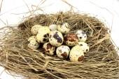Big quail nest — Stock Photo