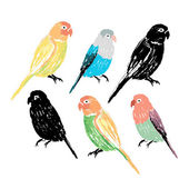 Set of the colorful hand drawn parrots — Stock Vector