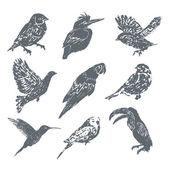 Ink hand drawn bird set — Stock Vector