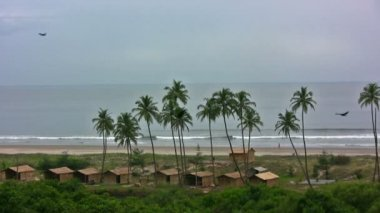 Palm trees on the coast of Goa in India — Stock Video