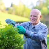 Senior man working in the garden — Stock Photo