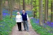 Loving senior couple walking in beautiful forest — Stock Photo