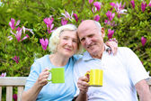 Happy mature family, loving senior couple drinking tea from big colorful mugs sitting on a wooden bench in the garden at the backyard of their house next to blooming magnolia tree — Stockfoto