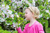 Toddler girl smelling blossoming fruit tree — Stock Photo