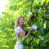 Young woman picking fruits in the garden — Stock Photo
