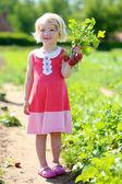 Little kid in vegetables farm — Stock Photo