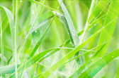 Green Grass Background with Rain Drops and Sun Light. — Stock Photo