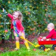 Kids playing in an apple garden — Stock Photo #52246573