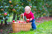 Little boy with apple basket — Stock Photo