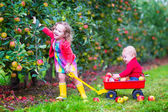 Kids playing in an apple garden — Stock Photo