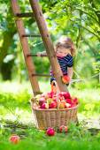 Little girl in an apple garden — Stock Photo
