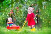 Kids playing in apple garden — Stock Photo