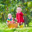 Kids picking apples in a garden — Stock Photo #53545313