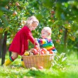 Kids picking apples in a garden — Stock Photo #53551065