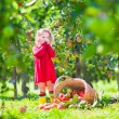 Little girl next to an apple basket tpped on its side — Stock Photo #53551517