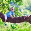 Little boy climbing a tree — Stock Photo #75869859