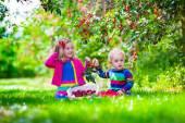 Kids picking cherry on a fruit farm garden — Stock Photo