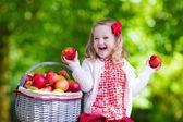 Little girl picking apples in fruit orchard — Stock Photo