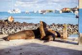 Sea lion in the Galpagos Islands — Stock Photo