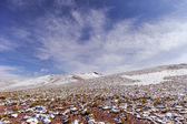Mountains of Bolivia, altiplano — Stock Photo