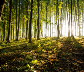 Nature. sunset in the woods — Stock Photo