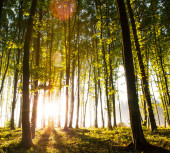 Nature. beautiful sunset in the woods — Stock Photo