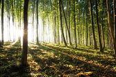 Natur. solnedgång i skogen — Stockfoto