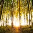 Nature. Beautiful morning scene in the forest with sun rays and long shadows — Stock Photo #55374525