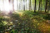 Nature. Sunlight falls on the rural road in the misty autumnal forest. Photo taken in September. — Стоковое фото