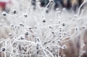 Frozen plant — Stock Photo