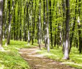 Strada nella foresta — Foto Stock